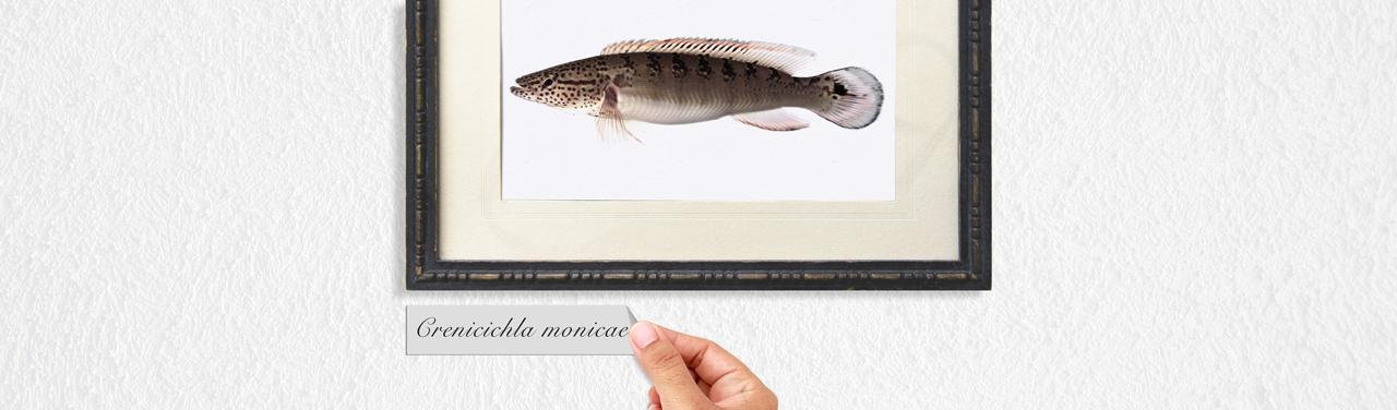 [Перевод] Сотня лет на то, чтобы правильно назвать рыбу