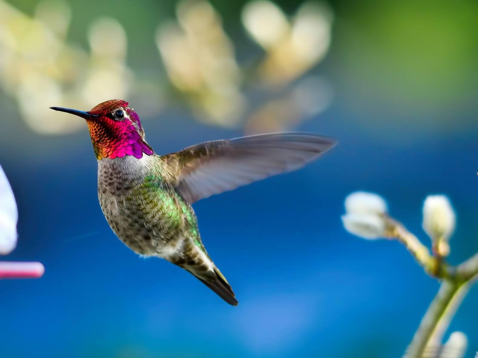 Картинки с надписью колибри