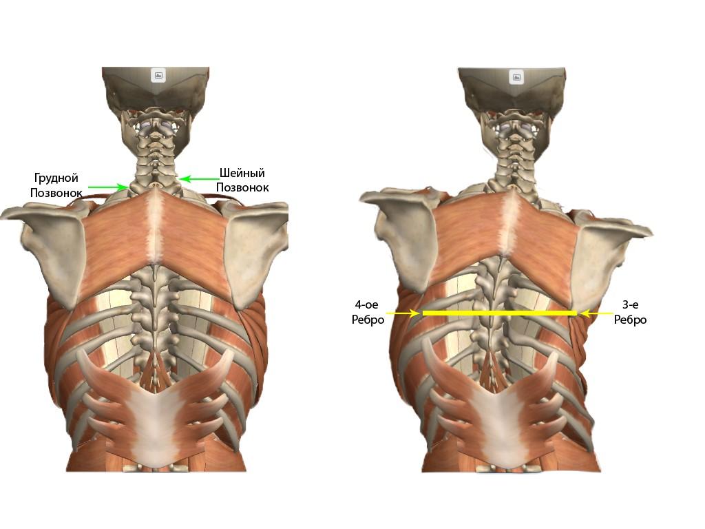 Норм картинки болит грудная клетка после падения на спину глупая статья