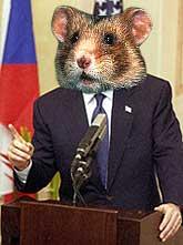 Hamster bush
