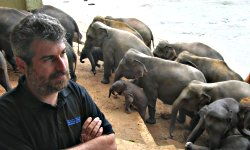 Брюс и слоны