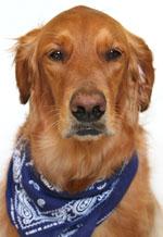 Собака Sadie из Amazon.com