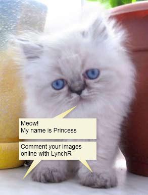 http://lynchr.com
