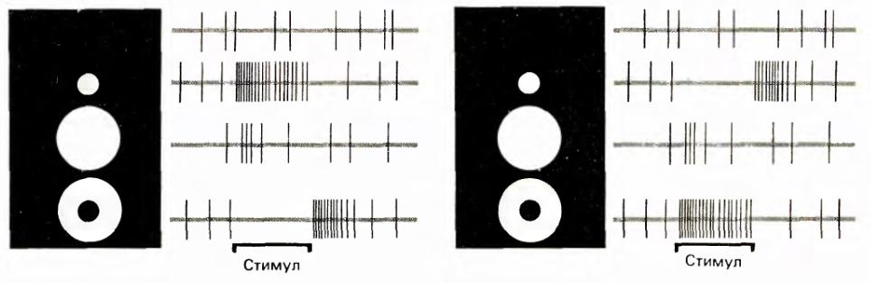 Логика сознания. Часть 11. Естественное кодирование зрительной и звуковой информации