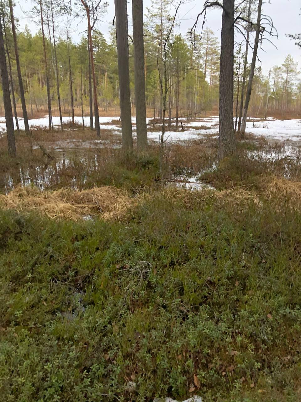 swamp_edge
