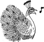 Singing peacock