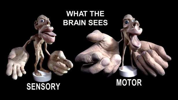 what the brain sees