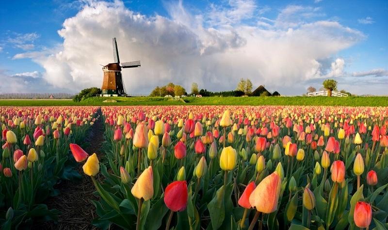 Еще одна история про переезд, на этот раз в Нидерланды
