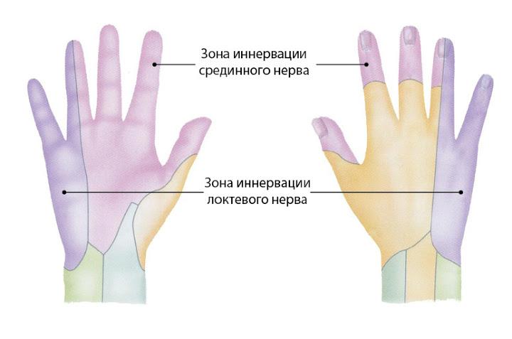 Нерв Локтевой