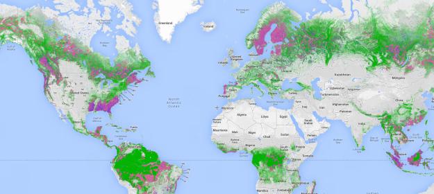 Google выпустил карту лесов мира: Global Forest Watch