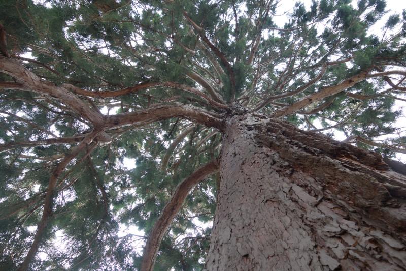 Вышел пакет Sequoia 0.20.0, реализация OpenPGP на Rust