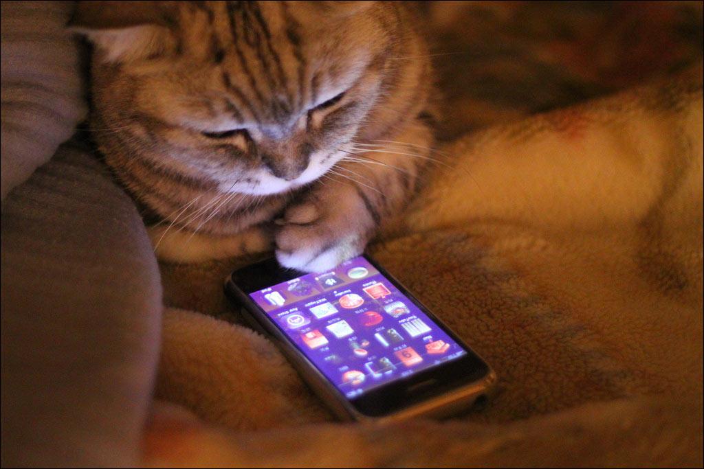 Прикольные картинки на мобильный-