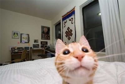 Вилкан играть на планшет Кошки поставить приложение Играть в вулкан Яльчики download