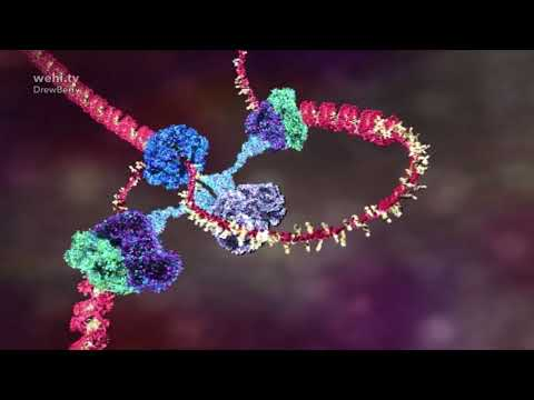 DNA animations for Science-Art exhibition
