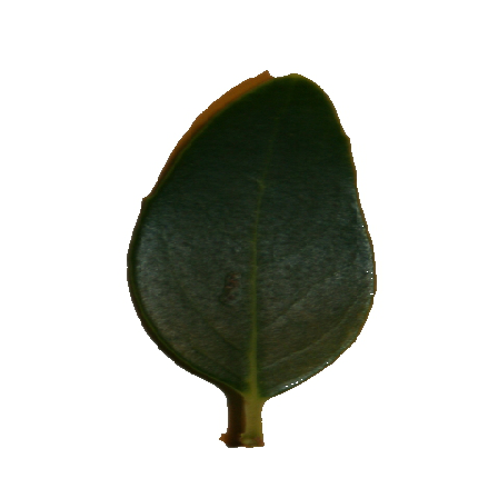 leafscan1 new