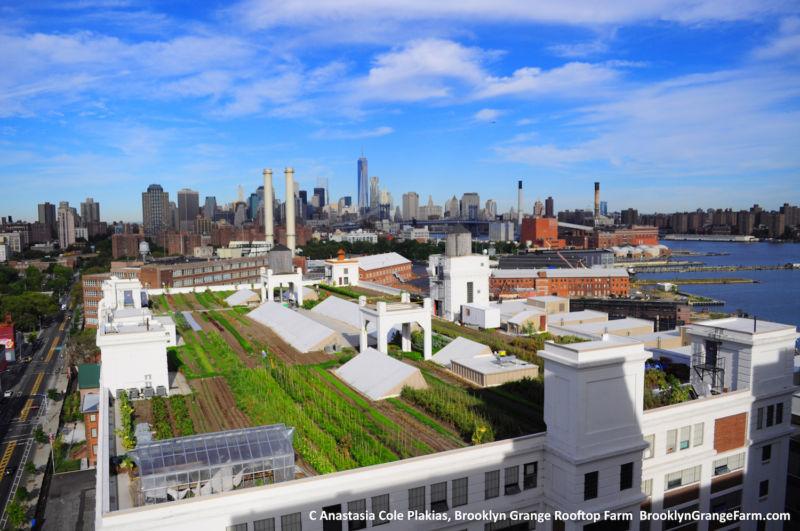 Городские фермы могут быть чрезвычайно эффективными, но не сейчас