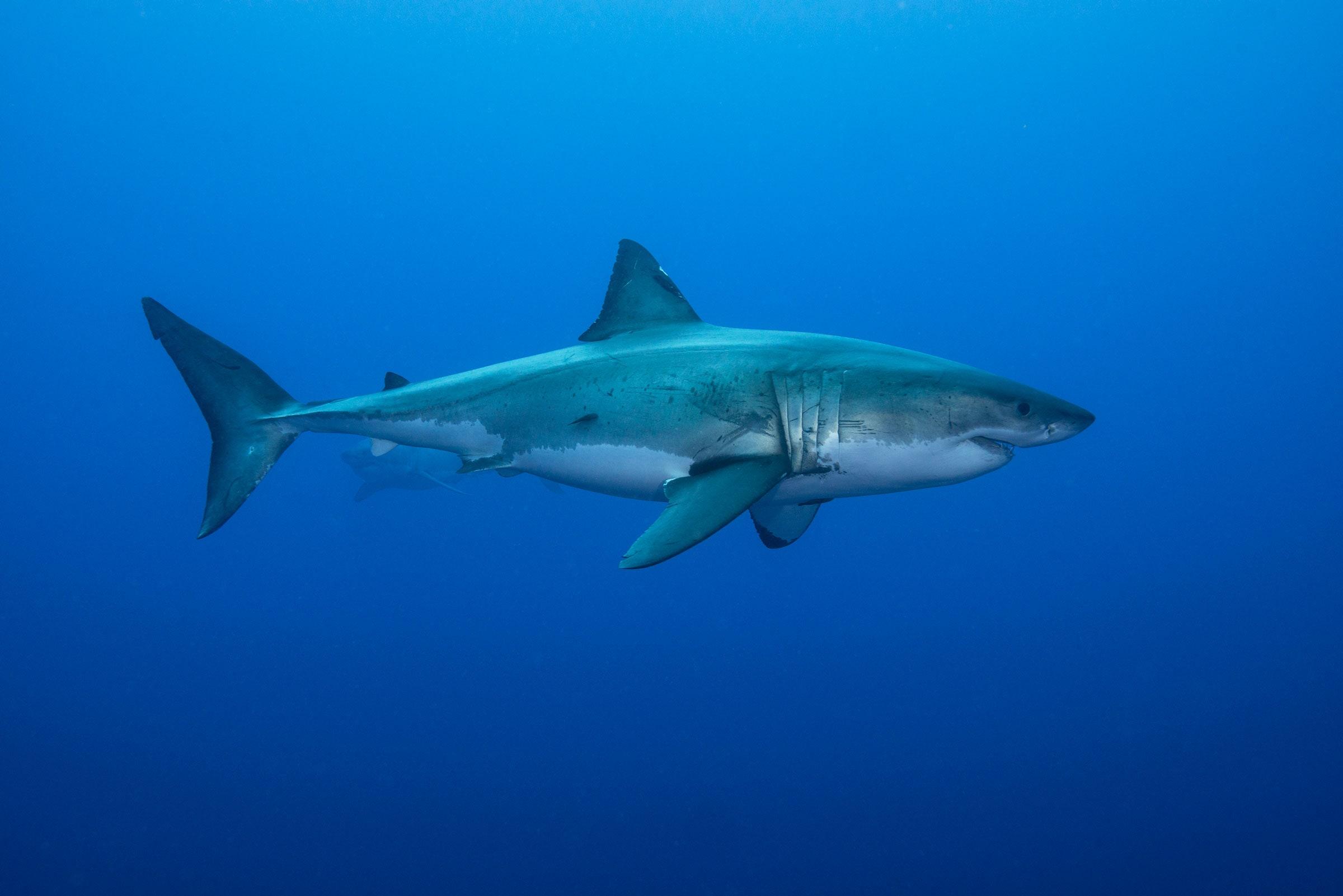 [Перевод] Физика в мире животных: как акулы ориентируются при помощи магнитного поля Земли