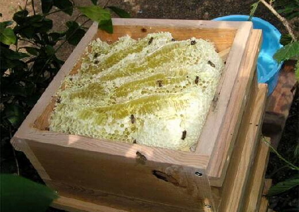 Inside the Japanese Beehive