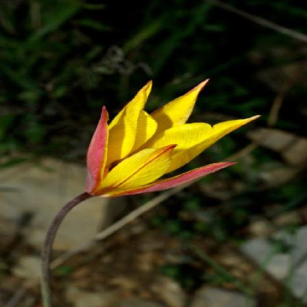 flower1 old