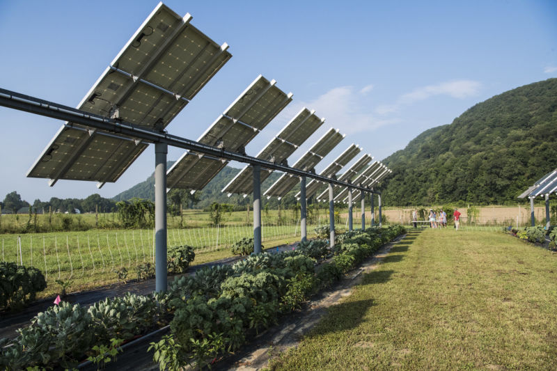 Сельское хозяйство и солнечные панели — win-win стратегия для энергетиков и фермеров