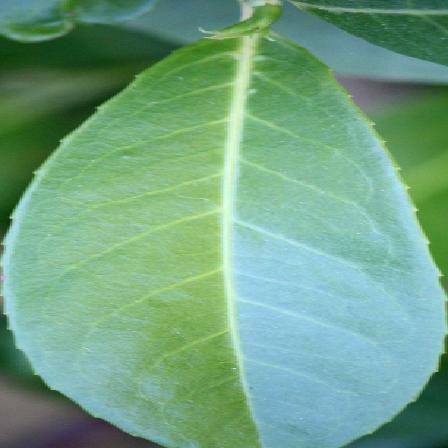 leaf1 new