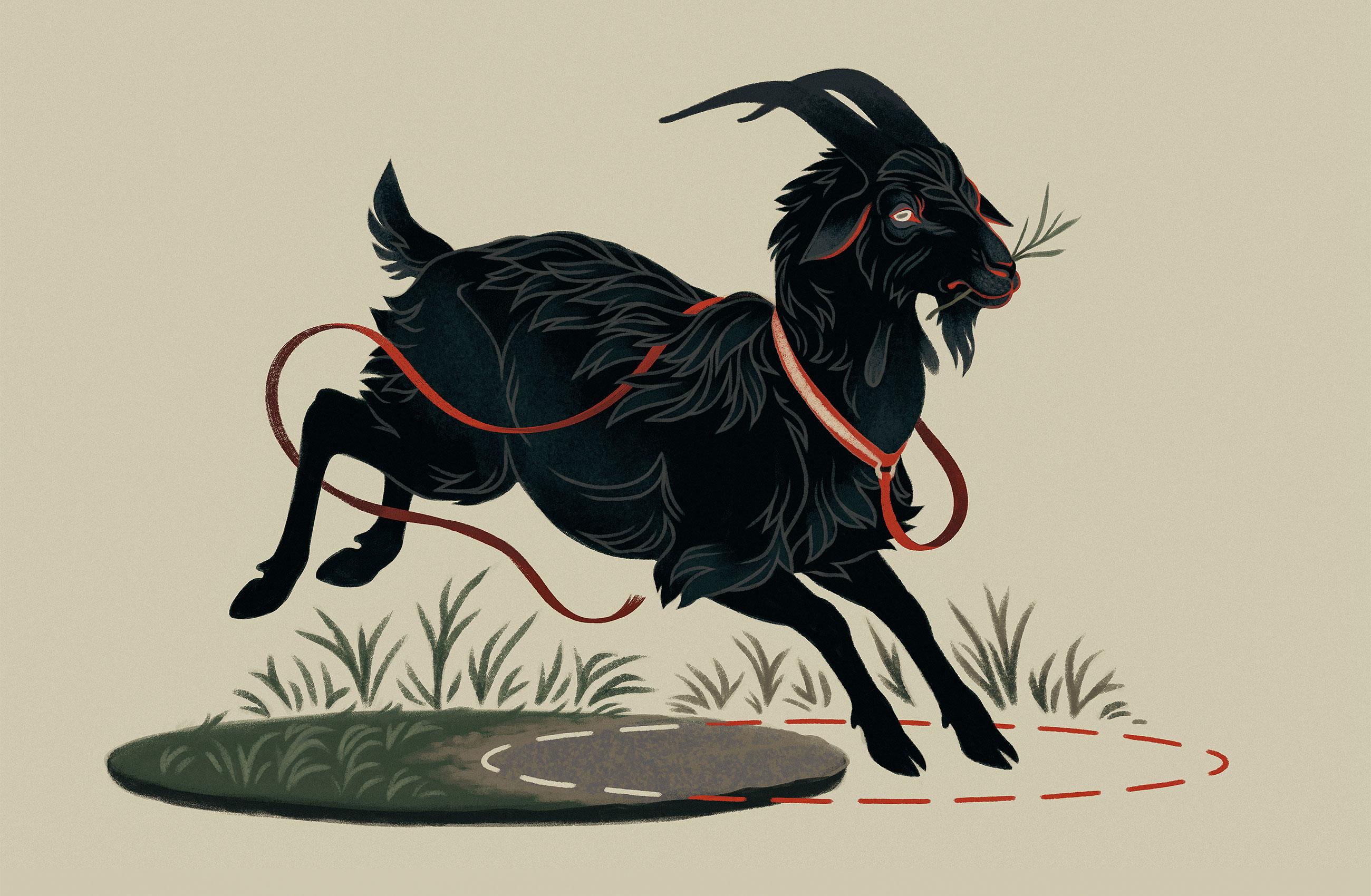 Перевод После столетий поисков получено точное решение задачи о козе на привязи