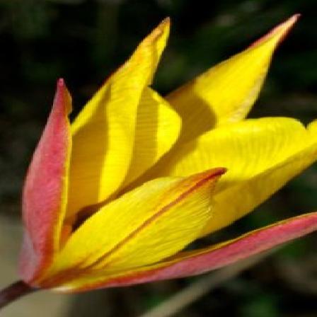 flower1 new