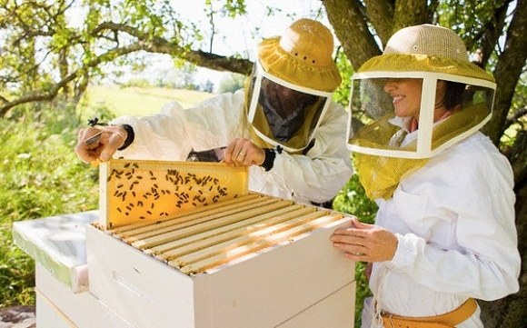 Beekeepers are against microcontrollers or about the benefits of
