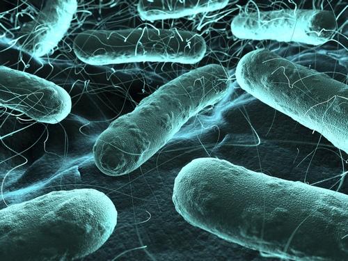 изображение пропионовокислых бактерий