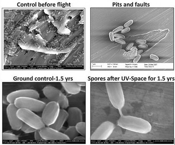 Бактерии с Земли способны колонизировать Марс