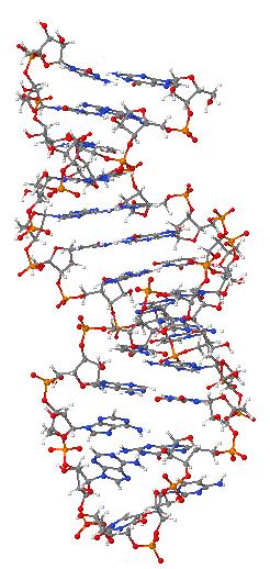 показана молекула РНК.