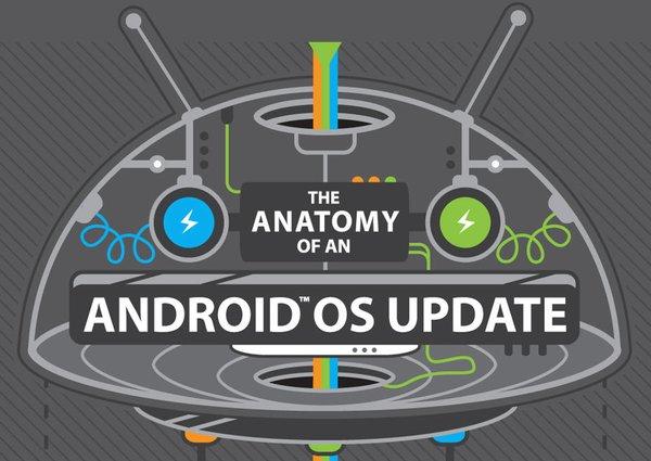 Это инфографика от HTC наглядно показывает, почему наши с вами Android-смартфоны вряд ли обновятся в следующем году