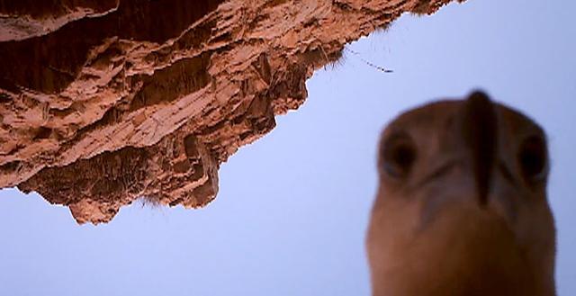 Орел украл камеру у экологов, запечатлев свой полет и самого себя