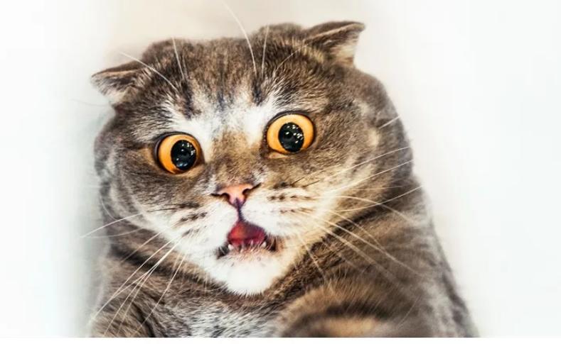 Хана котёнку. Почему сотрудники ненавидят CRM?
