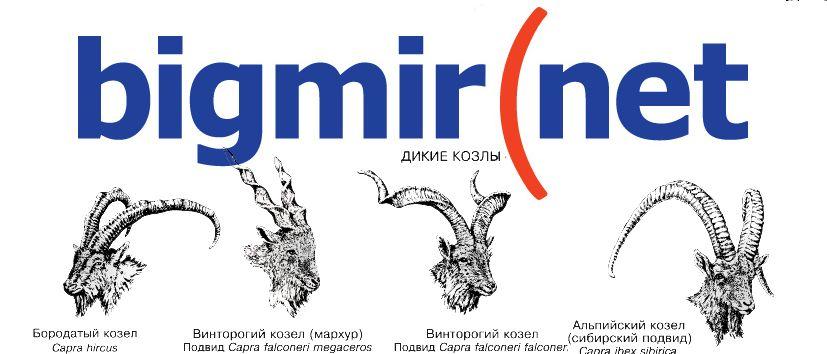 Кровавая хелоуинская резня от bigmir(net