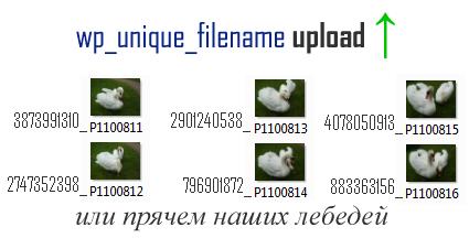 random_file_names