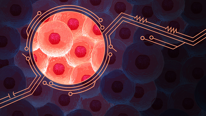 [Перевод] Математика раскрывает секреты обратной связи живых клеток