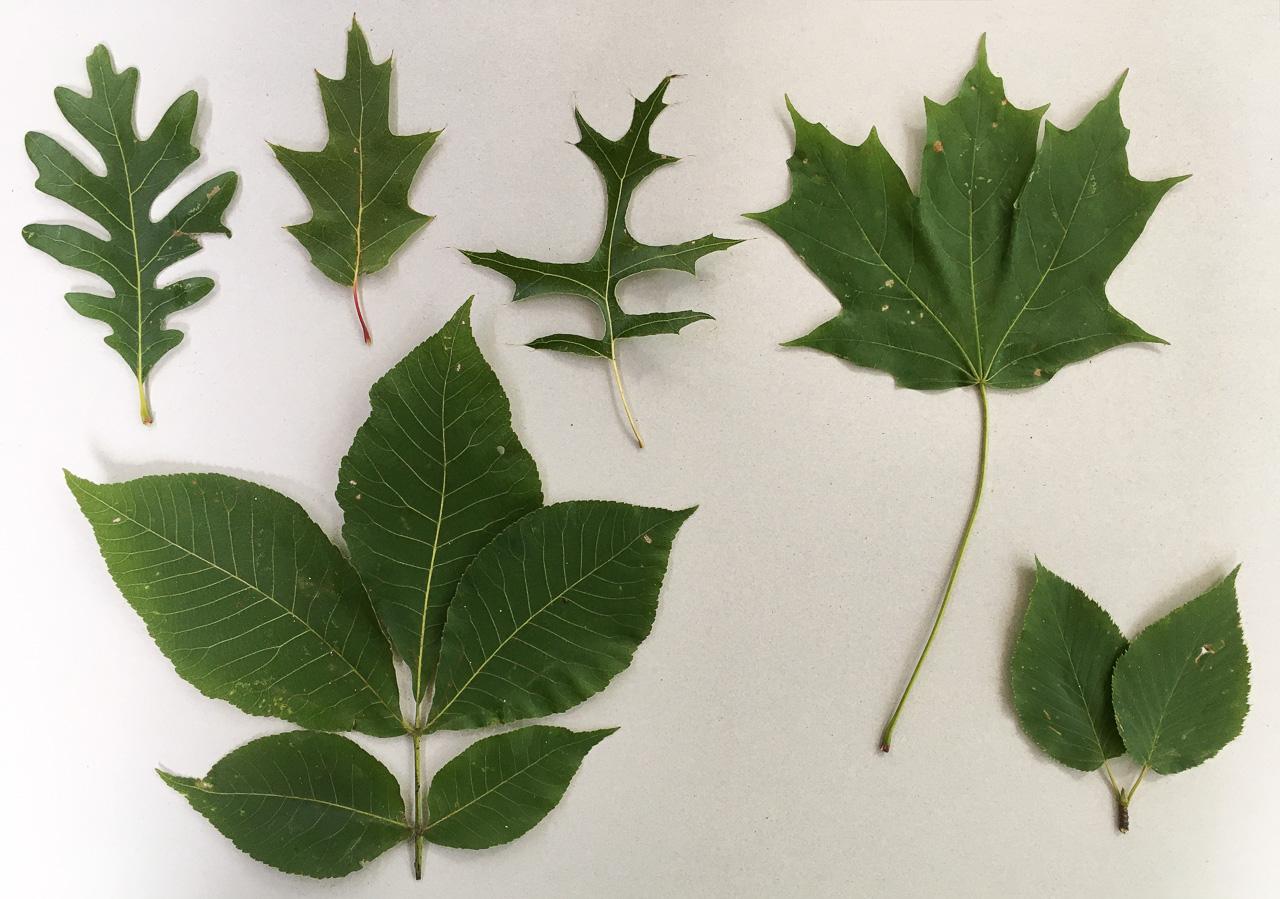 [Перевод] Новые вопросы о деревьях