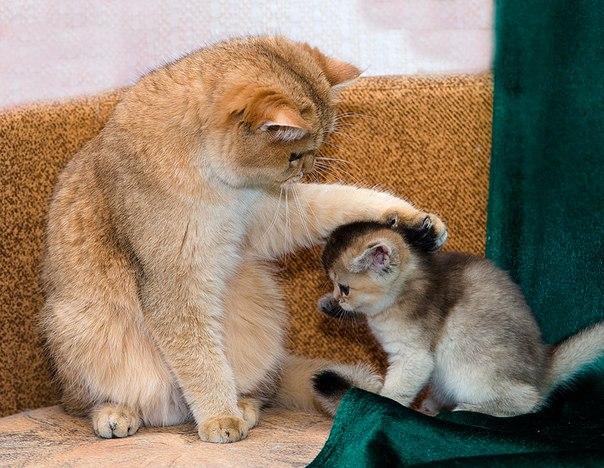 Добре ставлення приємно і кошеняті
