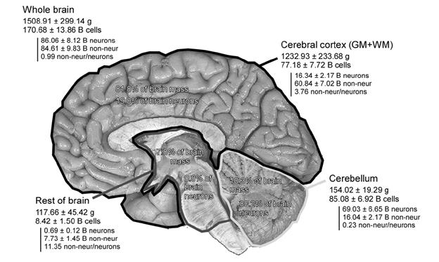 Логика мышления. Часть 15. Консолидация памяти