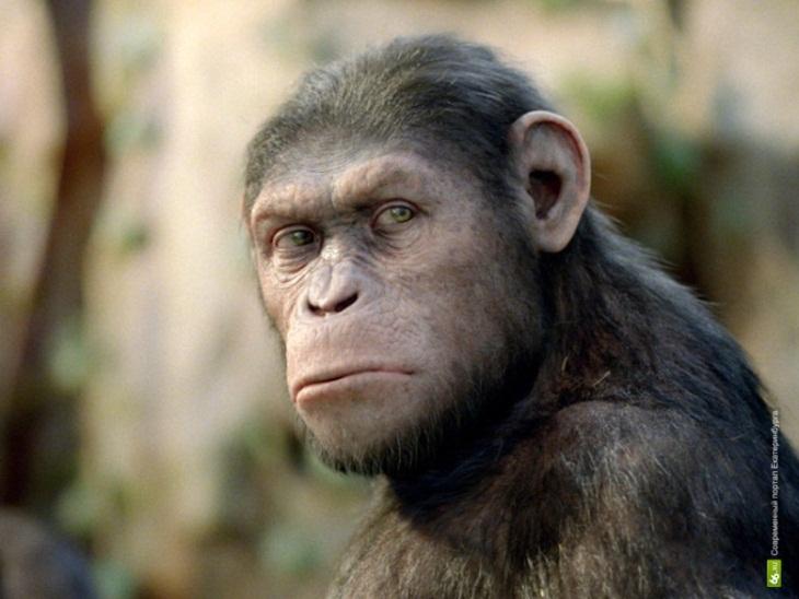 Человек похожий на обезьяну