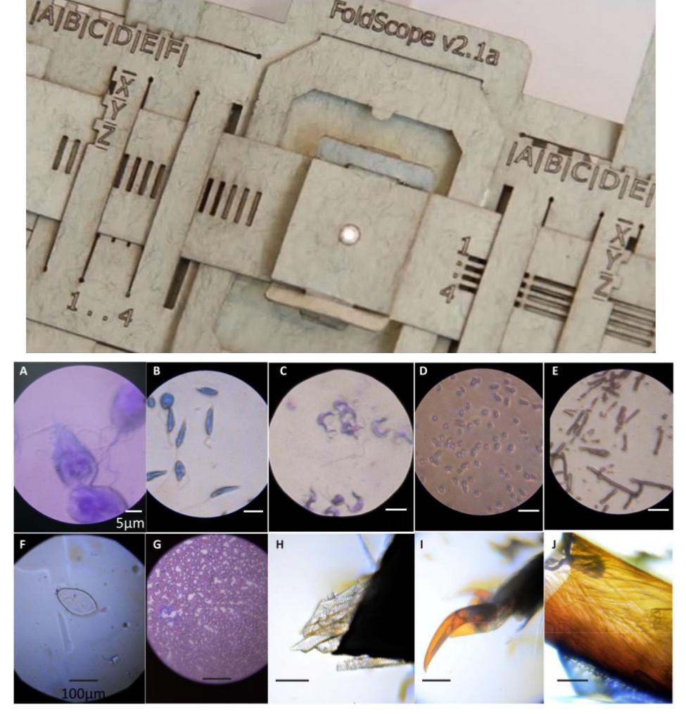 Бумажный микроскоп