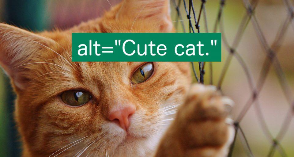 Здесь изображение котика с атрибутом alt=«Милый котик».