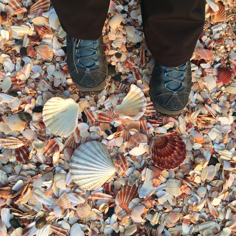 Ракушки пляжа Fenella Beach рядом c Peel Castle (фото: www.instagram.com/alinaliens)