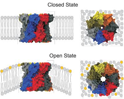 Различные состояния мембранных белков MscS