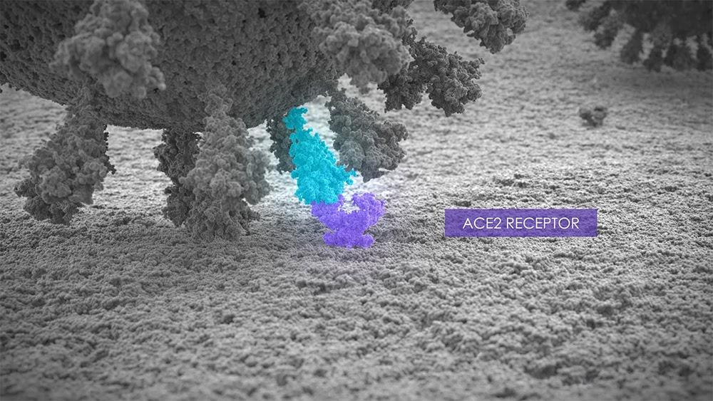 DaVinci Resolve. Коронавирус и поверхность клетки. Вирус прикрепляется к АСЕ2 рецептору.