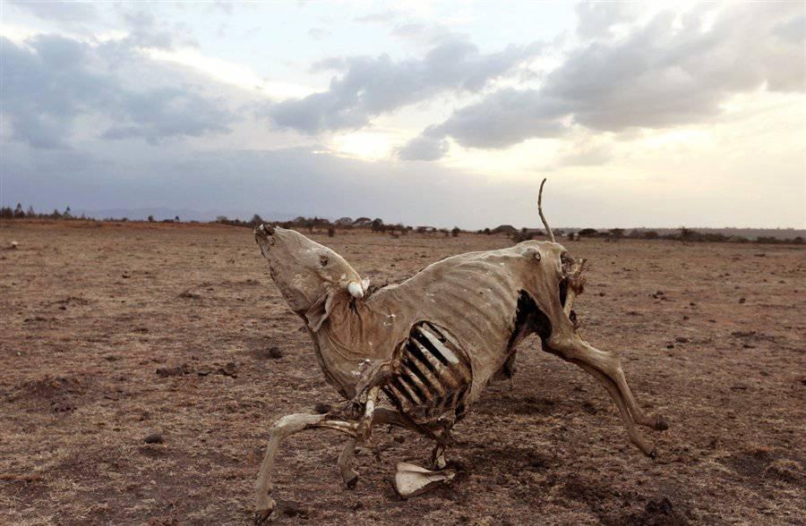 Существует миф, что дескать животные, которые остались не нужны будут выброшены в дикую среду и вымрут.  На деле же размножение коров будет искусственно уменьшаться.