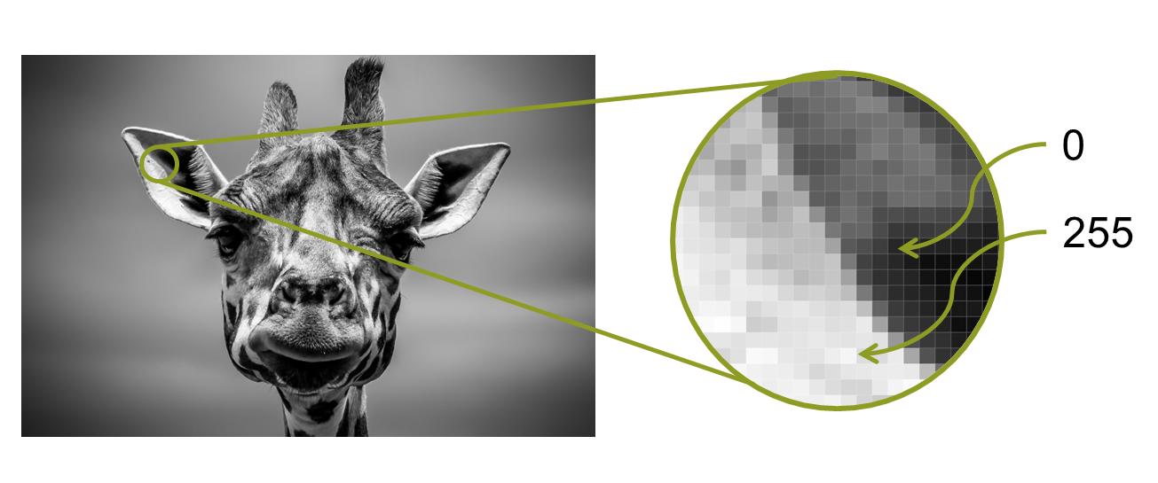 Пиксели растрового изображения и их яркость в однобайтной кодировке