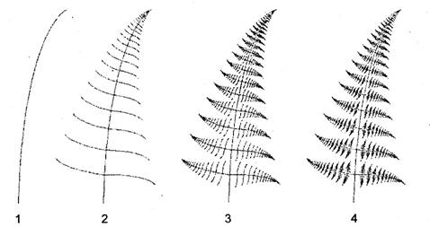 Фрактальное моделирование листа