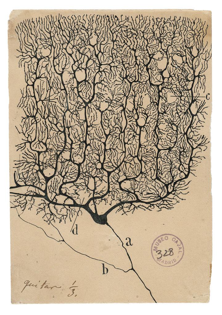 Сантьяго Рамон-и-Кахаль еще очень красиво рисовал (Wikimedia Commons)